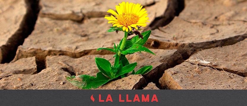 llama-29062017