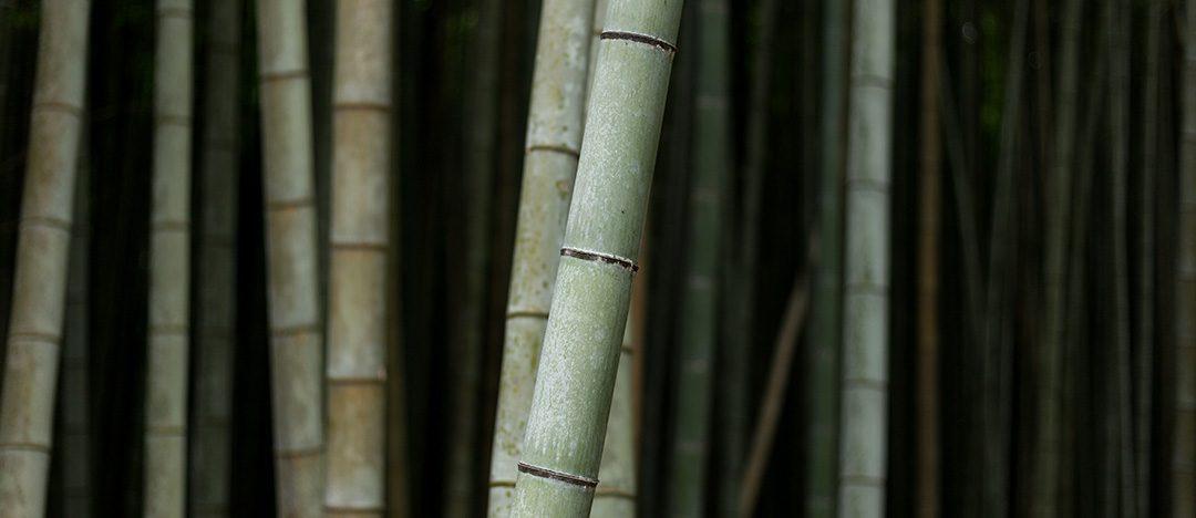 La leyenda del Bambú