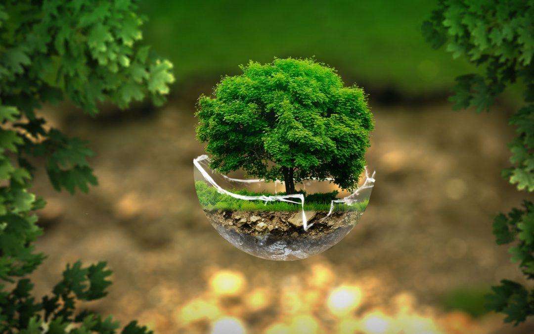 Sobre la ecología